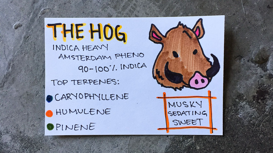 the hog drawing